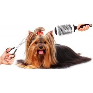 Spa Canino o Felino para...